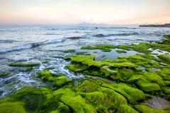 Rotsachtige die kust met groene algen in de vroege ochtend met bergmeningen wordt behandeld Royalty-vrije Stock Foto's