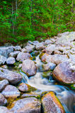 Rotsachtige kreek in Tatra-bergen Stock Foto's
