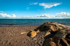 Rotsachtige kust Royalty-vrije Stock Afbeeldingen