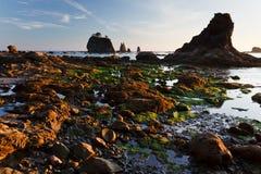 Rotsachtige kust en tidepools bij zonsondergang Royalty-vrije Stock Foto's