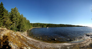 Rotsachtige kust met bos Stock Fotografie