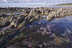Rotsachtige kust met kelp in Bretagne at low tide Stock Foto