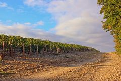 Rotsachtige manier dichtbij wijngaarden stock afbeeldingen