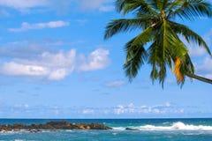 Rotsachtige oceaankust en palm tegen de hemel stock foto's