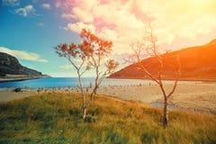 Rotsachtige overzeese kust met bomen Stock Afbeeldingen