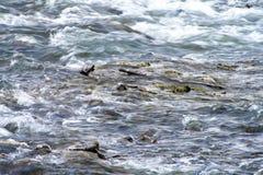 Rotsachtige rivier met snel huidig royalty-vrije stock afbeelding