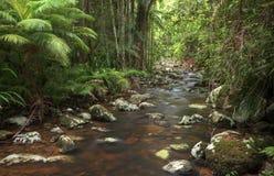 Rotsachtige stroom door regenwoud en palmen royalty-vrije stock foto