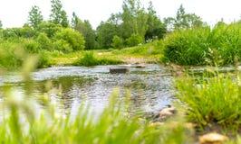 Rotsachtige stroomstromen door een bosopheldering met een vage achtergrond stock foto's