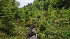 Rotsachtige waterstroom in midden van bos stock afbeelding