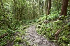 Rotsachtige weg in de natte groene subtropische bosazoren, Portuga Stock Foto's