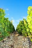 Rotsachtige weg dichtbij wijngaarden royalty-vrije stock afbeeldingen