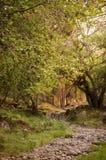 Rotsachtige weg in oud bos Royalty-vrije Stock Foto