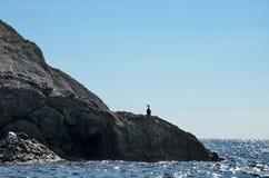Rotsclose-up op het kustoverzees en de vogel op de achtergrond van blauwe hemel, de Krim Royalty-vrije Stock Foto's