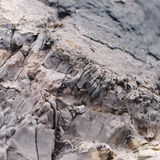 Rotsdetail van Jurakust Stock Foto