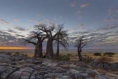 Rotsen, baobabs en wolken royalty-vrije stock foto's