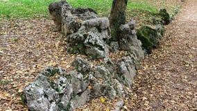 Rotsen, bladeren en de herfst Stock Fotografie