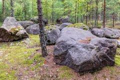 Rotsen in bos Stock Foto