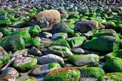 Rotsen die met zeewierenachtergrond worden behandeld Stock Afbeelding