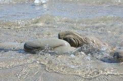 Rotsen door het overzees worden gevormd die Stock Foto