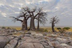 Rotsen en baobabbomen Royalty-vrije Stock Foto