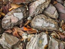 Rotsen en Bladeren Stock Foto