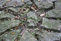 Rotsen en Bladeren Royalty-vrije Stock Foto