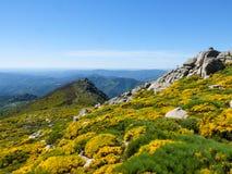 Rotsen en bloeiende bloemen in de Cevennes-bergen in Frankrijk stock foto's