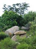 Rotsen en bomen Royalty-vrije Stock Foto