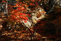Rotsen en bomen Stock Fotografie