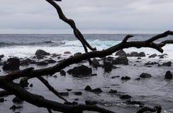 Rotsen en bomen op het strand stock foto's