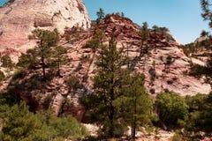 Rotsen en bomen in Zion National Park stock foto
