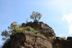 Rotsen en boom Stock Afbeelding