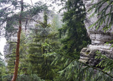 Rotsen en bos Stock Foto