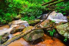 Rotsen en een kleine waterval in het bos Royalty-vrije Stock Foto's