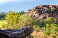 Rotsen en Gombomen - het Nationale Park van Kakadu stock afbeeldingen