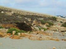 Rotsen en groene installaties op het zand van het strand stock foto's