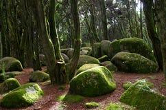 Rotsen en mos in bos Sintra royalty-vrije stock foto's