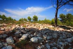 Rotsen en pijnbomen Stock Foto's