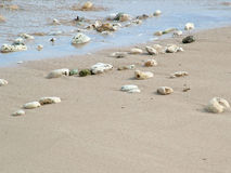 Rotsen en shells op strand Stock Afbeelding