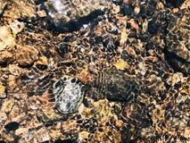 Rotsen en stenen binnen duidelijke zoetwater royalty-vrije stock afbeelding