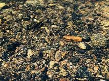 Rotsen en stenen binnen duidelijke zoetwater royalty-vrije stock fotografie