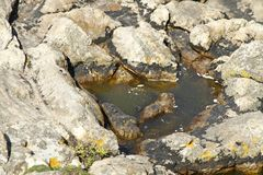Rotsen en water marron Royalty-vrije Stock Afbeeldingen