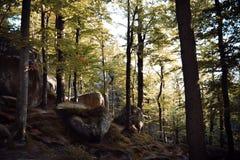 Rotsen, hemel, bergen een bos Stock Fotografie