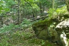 Rotsen in het bos met installaties Stock Afbeeldingen