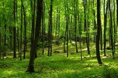 Rotsen in het groene bos. Het Poolse Juragebergte Stock Foto