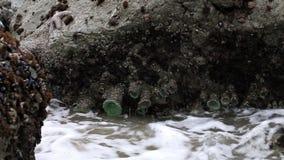 Rotsen met Overzeese Golven Schommelende Pacifica California stock video