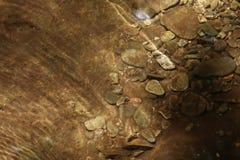 Rotsen onder water stock afbeelding