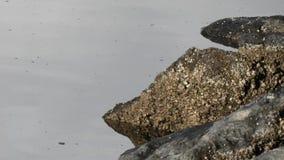 Rotsen op de kust in het water stock video