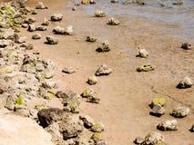 Rotsen op de kust morkskom Stock Foto