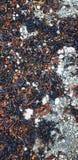 Rotsen op het Strand stock afbeelding